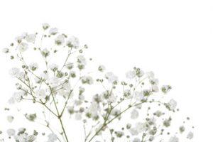 thủ tục nhập khẩu hoa tươi 2020