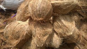 thủ tục nhập khẩu dừa khô đã bóc vỏ